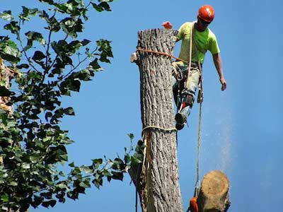 Mentor Tree Service Tree Removal in Madison