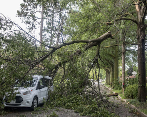 Storm Tree Damage in Lake County