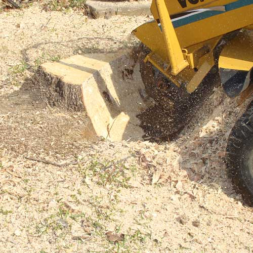 Grinding a stump in Mentor, OH