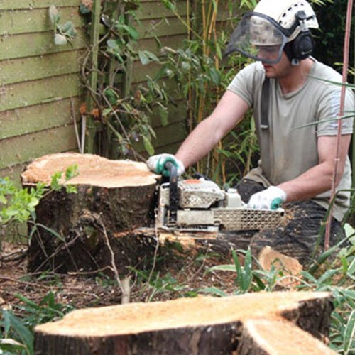 Mentor Tree Service, Stump Grinding